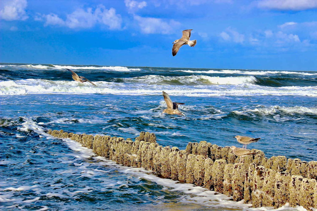 Inselträume an der Nordsee 35