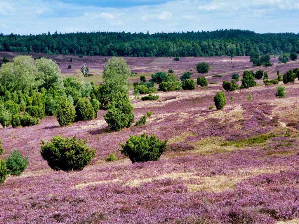 Lüneburger Heide 50